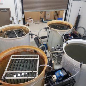 dissolved oxygen uptake testing