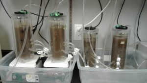 high strength ammonia test